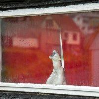 Фарерские окна. :: Olga Koroleva