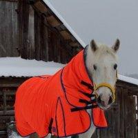 Мой конь в пальто)))) :: Любовь Анищенко