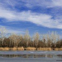 Весеннее настроение в феврале :: Ксения Довгопол