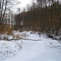 Замерзшая речка :: Леонид Корейба