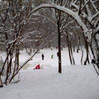 Зимние игры в парке... :: анна нестерова