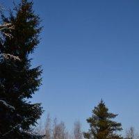 Зимний лес. :: zoja
