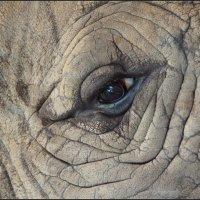 Взгляд носорога :: Наталия Григорьева