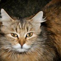 мама-кошка :: Юлия Шевчук