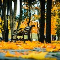 Осень в парке :: Марина Шлык