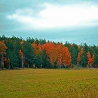 Осень .Нивы сжаты :: petyxov петухов