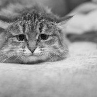 Дикое-дикое животное :: Елена Васильева