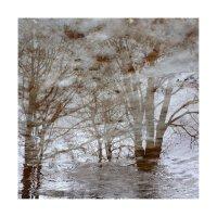 деревья-07 :: наташа савельева