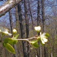Весна :: Любовь Игнатова