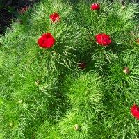 Цветы весенние :: Анатолий
