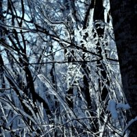 В зимнем лесу :: Мария Климова