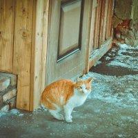Не пускают домой :: Дмитрий Тарарин