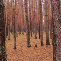 Осень :: Мария Спивак