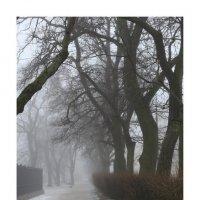 туман-01 :: наташа савельева