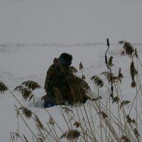 Зимой на озере... :: Алёна Савина