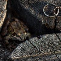 Царевна - лягушка :: Михаил Денисов