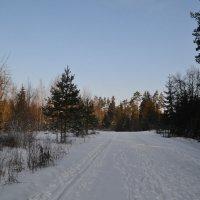 Зимняя дорога. :: zoja