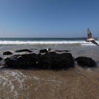 Прилив на Атлантике в городе Порто... :: Сергей
