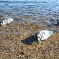 Весна на заливе :: Ольга