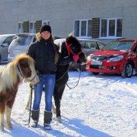 На старте животные и машины . :: Мила Бовкун