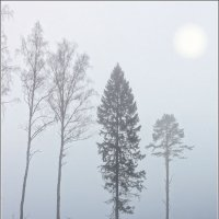 Туманное фото :: antip49 antipof