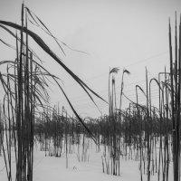 Поле зимой :: Vladimir Urbanovych