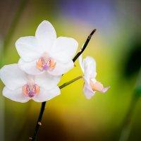 Приближается весна ) :: Павел Хохлов