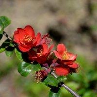 Весна :: Татьяна