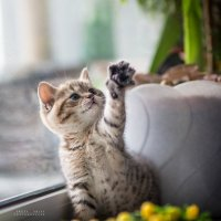ДАЙ ПЯТЬ!!!! :: Sergey Tyulev