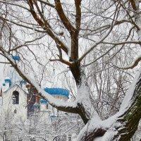 за снежными ветвями :: Елена
