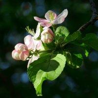 С приходом календарной весны! :: Ната Волга