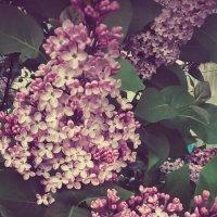 Уже скоро весна :: Любовь Вящикова
