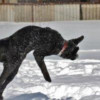 Собачья акробатика... :: VADIM *****