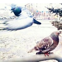 Birds :: Azam Ibrahim