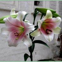 Цветок и камень :: Николай Дони