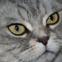 С Днем кошек ! :: Damir Si