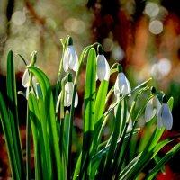 С Весной Вас Господа-товарищи !!! :: Alexander Andronik