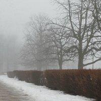 Деревья, кусты и дорожка. :: Владимир Гилясев