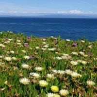 Цветы океана. :: Sergey Baranov