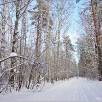 Прозрачность зимнего леса :: Лидия (naum.lidiya)
