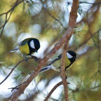 птички-сестрички :: Татьяна Малинина