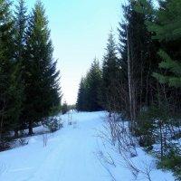 Лыжня на горе Долгой! :: Елизавета Успенская