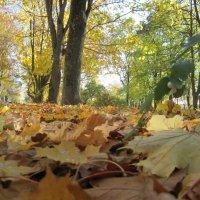 золотая осень :: Любовь Космачева