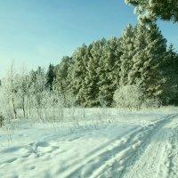 Зима морозная. :: Александр