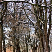 Зима на исходе :: Orest Zherebetskiy