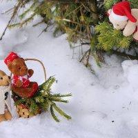 Мишки в лесу :: Элен .