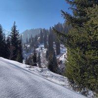 Проваливаясь в снег.. :: Сергей Мурзин