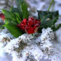 В снежном плену... :: TATYANA PODYMA