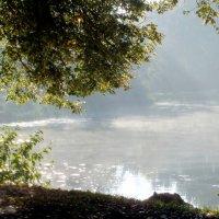 Про солнце на пруду :: Юрий Цыплятников
