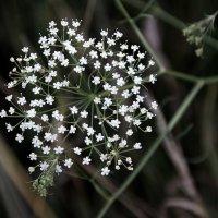 Незамысловатые  цветы... :: Валерия  Полещикова